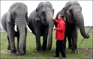 _45521118_elephants