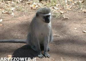20101007_macaco_primate_scimmia