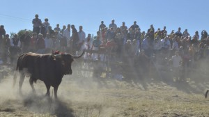 Celebracion-torneo-Toro-Vega-Tordesillas_EDIIMA20130917_0283_13