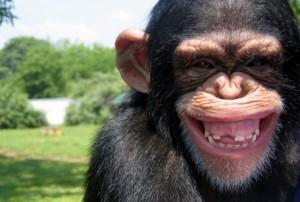 Scimpanzé-che-ride-456x308