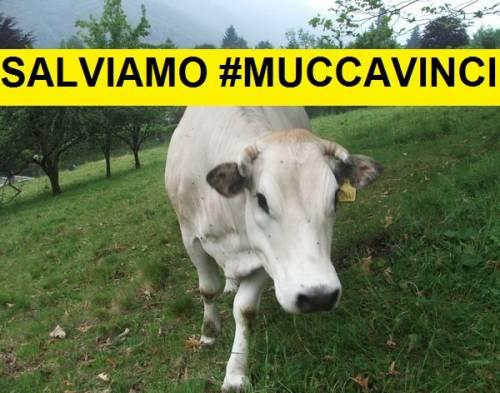 muccavinci