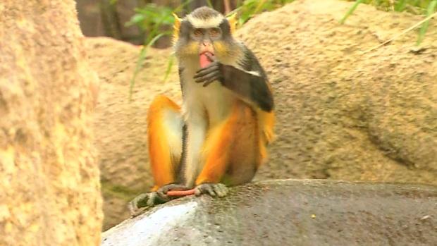 monkey_r620x349