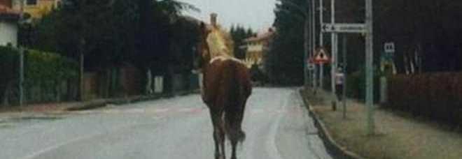 20150223_cavallo