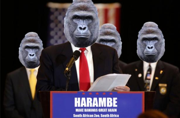 harambe-for-president